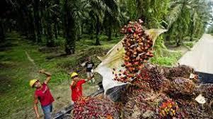 Palm yağı ile ilgili bütün tartışmalar 2016 yılında Avrupa Gıda Standartları Ajansı(EFSA)'nın palm yağının kötüleşen Avrupa ekonomilerinin etkisiyle Avrupa da kullanımı artan palm yağının vücuttan atılamayan toksik maddeler içerdiği yönünde ki raporu ile başlayıp, 2017 ocak ayındaki BBC'nin Ferrero markasının ürettiği Nutella'nın bileşiminde bulunan kıvam ve lezzet arttırıcı özellikleri nedeniyle kullanılan palm yağının sağlık açısından tehlikeler içerdiğinin basına ve kamuoyuna duyurulmasıyla doruk noktaya ulaştı.