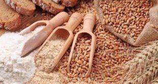 Siyez buğdayı ya da siyez buğdayından üretilen siyez bulguru bugünlerde buğday türevli ürünlerde tat ve lezzet yönünden adından sıkça söz ettiren bir buğday türüdür. Kaplıca, einkom gibi adlarla da anılan bu buğday türü yaklaşık 10.000 yıldır Fransa topraklarında boy verdiği rivayet edildiği gibi, Fas, Eski Yugoslavya'nın da bazı bölegelerinde yetiştirilmekteydi. Türkiye'de yetişen Latince de adıyla Triticum Dicoccum şeklinde de adlandırılmaktadır. Anadolu coğrafyasında Frigya, Hitit uygarlıkları döneminde ekilip üretiminin yapıldığı, günümüzde de Anadolu'nun bazı bölgelerinde halen üretiminin yapıldığı bilinmektedir.
