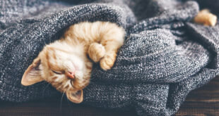 Bilimsel verilere göre, bir kişi günde 7-8 saat uyumalıdır. Ama çoğumuz bunu yapmıyoruz. Bazen bizden kaynaklı bazen de dışarıdan kaynaklı sorunlar yeteri kadar uyumamıza engel oluyor. Yazımızın bu bölümünde, size daha iyi bir uyku için yapmanız gerekenleri, maddeler halinde şöyle söyleyebiliriz;