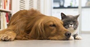 Birçok evcil hayvan sahibi, hayvan beslemesinin onları ne kadar mutlu ettiğinden bahsediyor ve bundan bahsederken, hayvan beslemesinin sağlık ve manevi faydalarını bile bilmiyorlar. Araştırmalar, hayvanları beslemenin mutluluktan çok daha fazlasını verdiğini kanıtladı. Özellikle köpek beslemesinin kalp hastalıklarına yakalanma riskini azalttığı bilinmektedir.