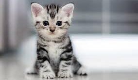 Kediler, kendineaitbirodada, pop haber