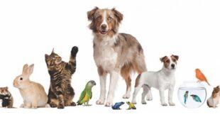 15 Ekim 1978 tarihinde Paris UNESCO evinde ilan edilen Hayvan Hakları Evrensel Beyannamesi'ne göre genel olarak hayvan hakları şu şekildedir;